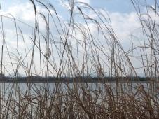 Nak-donggang River peeking through the reeds